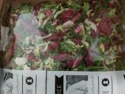 Salat Toscana bl. ready to eat 1 x 500 g.